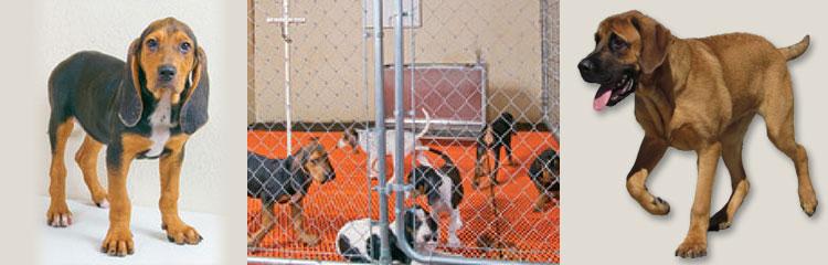 Oak Hill Genetics Dogs Pic Collage